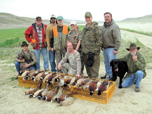 2010_pheasant8.jpg