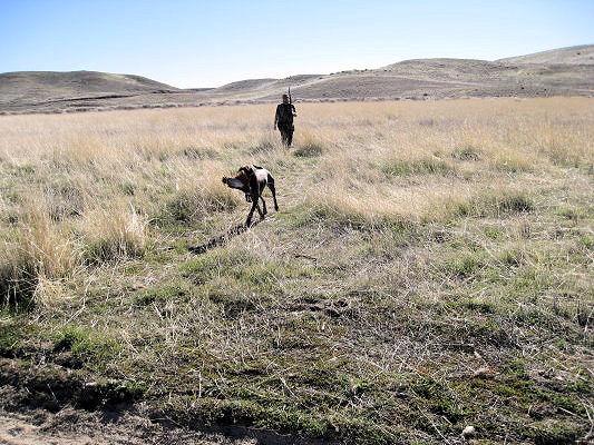2011_pheasant10.jpg