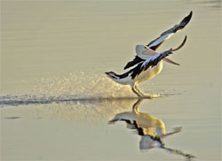 """There may not be anything as water-resistant as this cute, adorable and slightly """"petulant"""" little pelican, but an acid-stained concrete floor comes close. (BTW, his name is """"Rodney"""".)"""