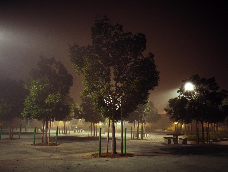 santa.monica.park.trees.jpg