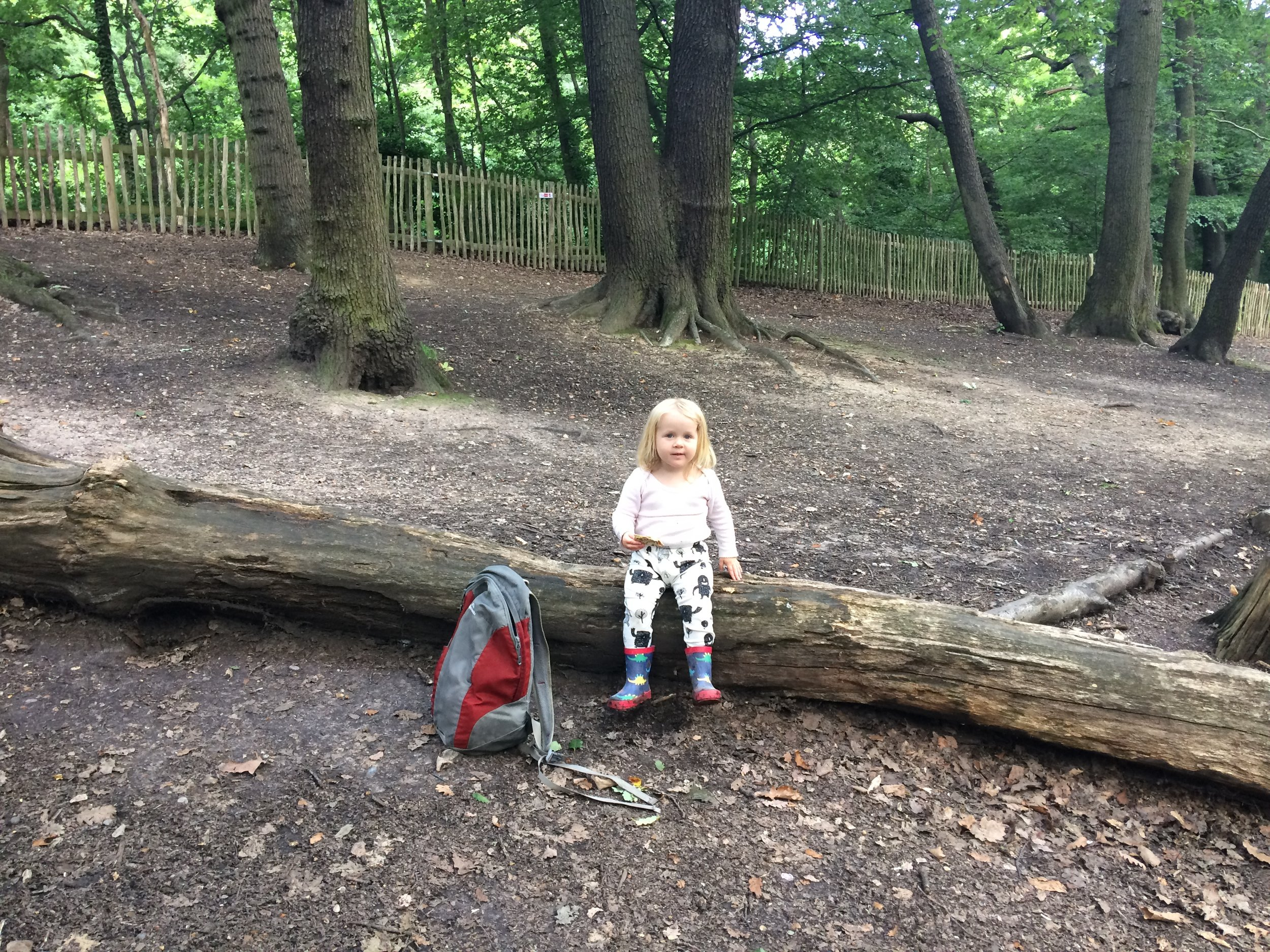 Rosa in Sydenham Woods, the closest we have to the countryside