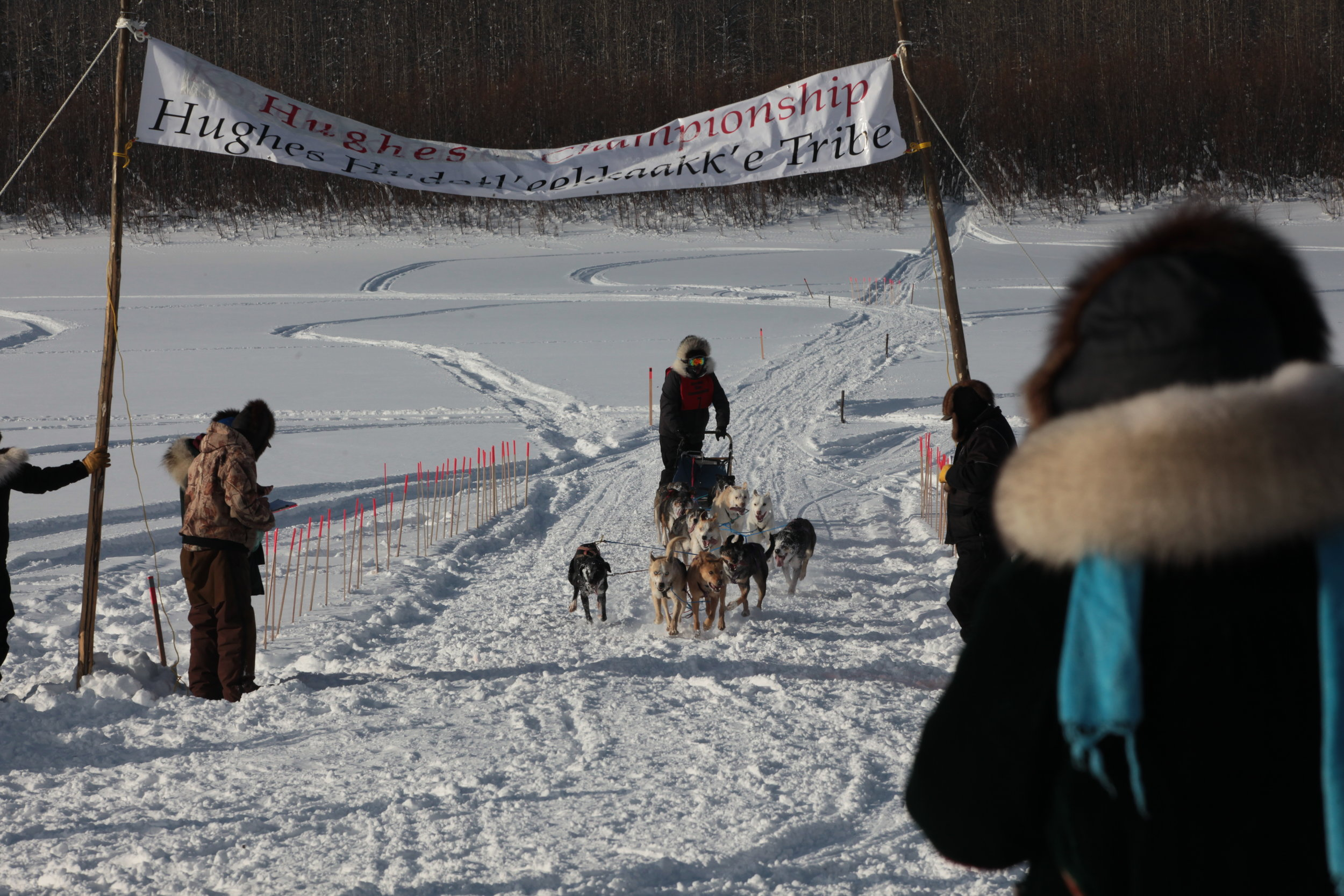InterVillage Sled Dog Race in Hughes, March 2017