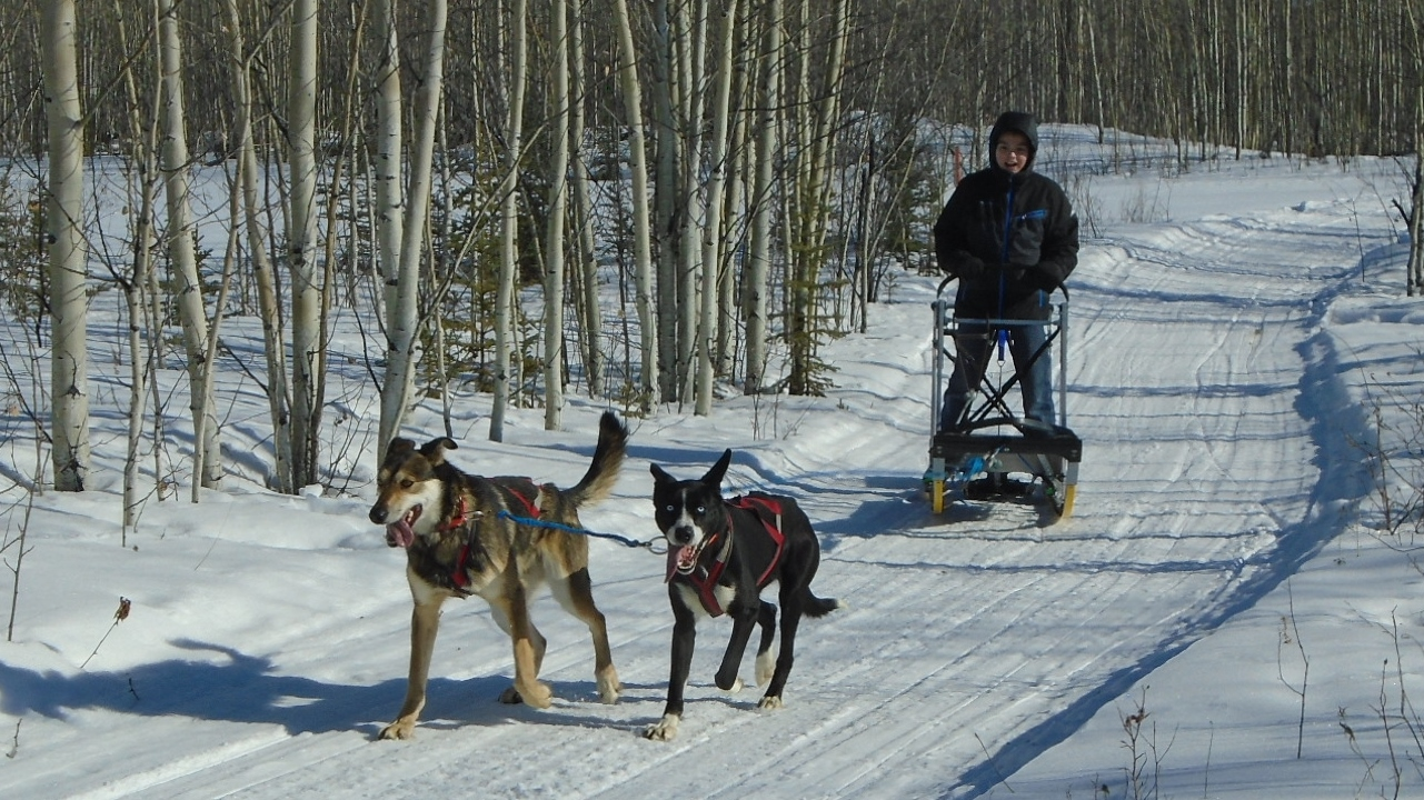 Mentasta Lake School student running dogs at Tok Track.