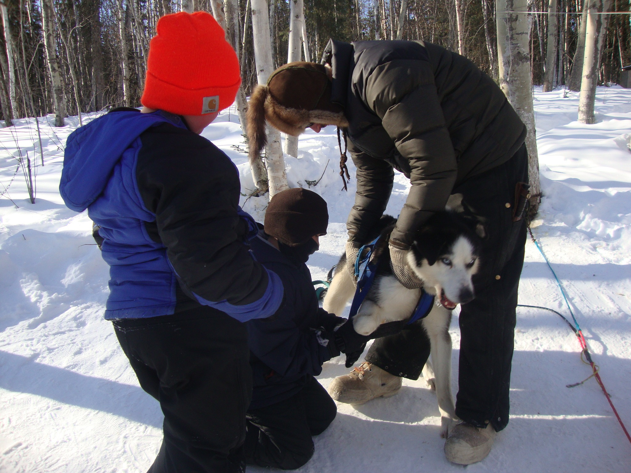 Eagle students learn to harness dog at Cranberry Kennel.
