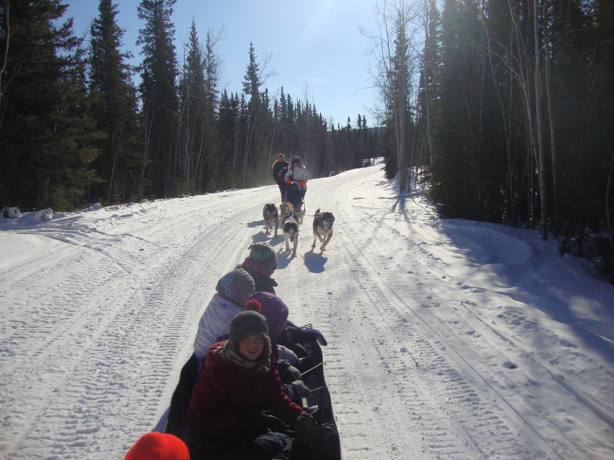 Eagle School students running Cranberry Kennel dogs.