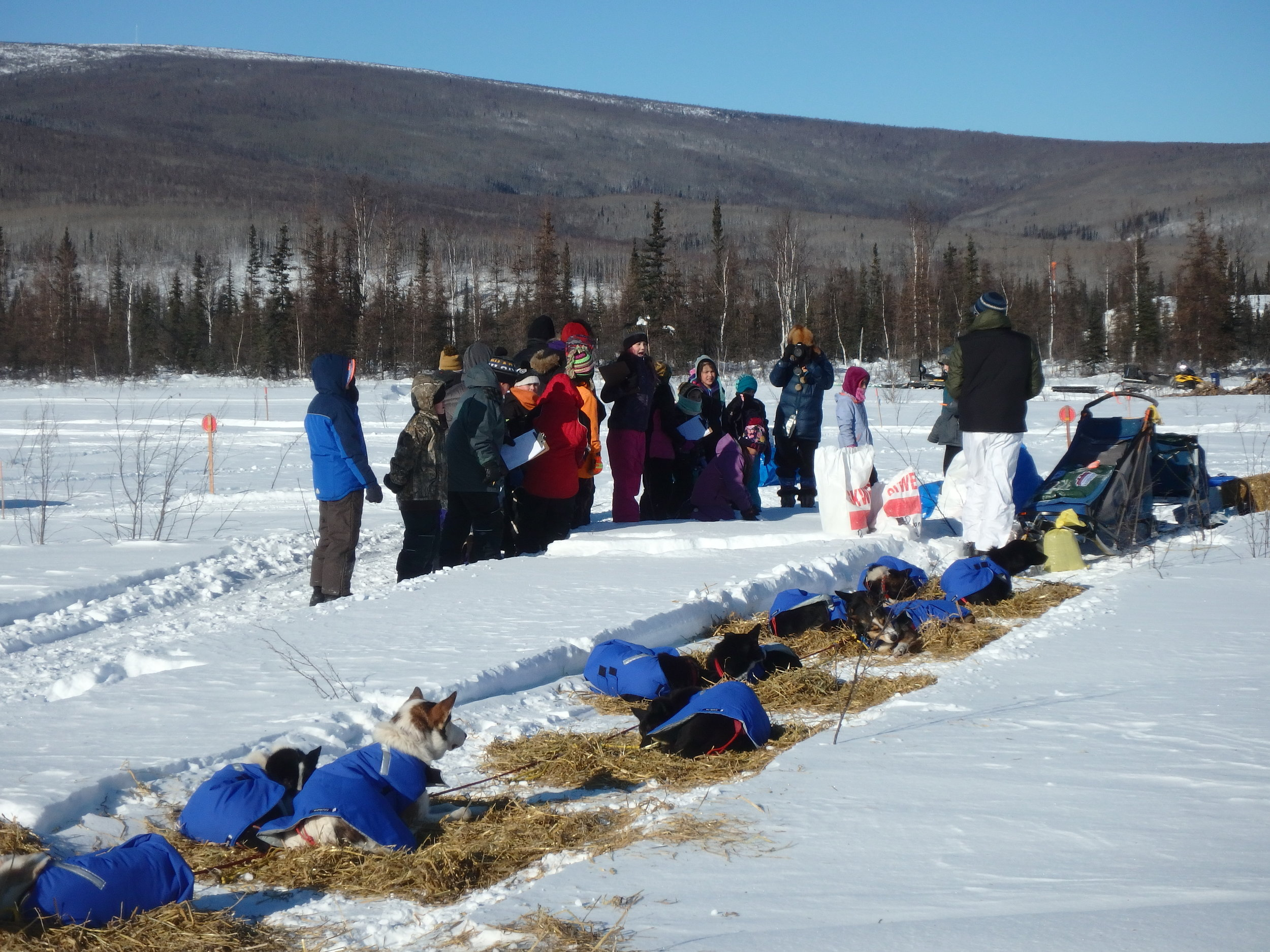 Minto School students shadowing a veterinarian while checking in with Iditarod Race musher and dog team.