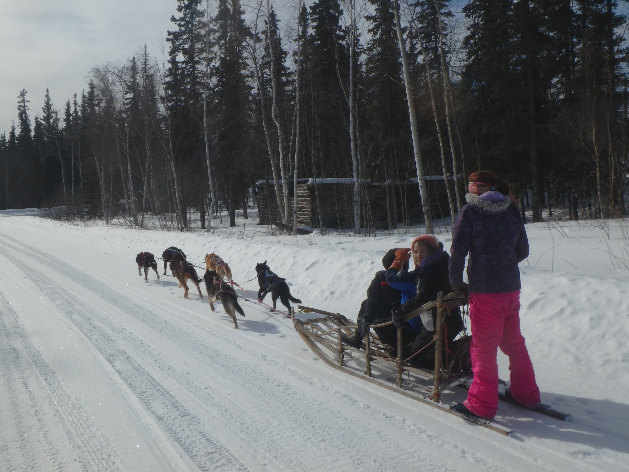 Minto School students running Lloyd Charlie's dogs.