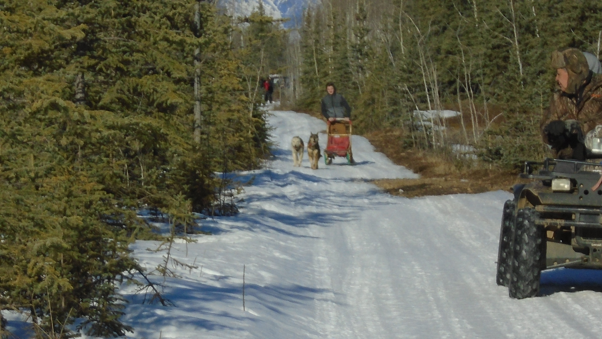 Tok School students running Hugh Neff's dogs.
