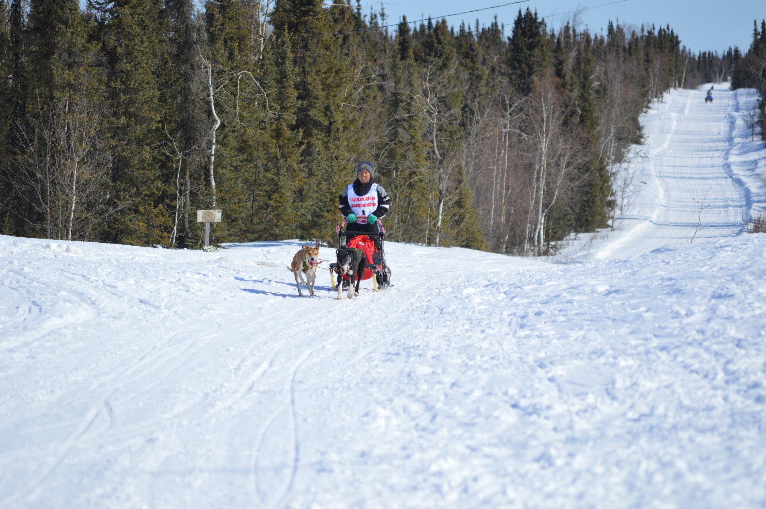 Huslia Jr. Carnvial - Junior musher closing in on Finish Line.