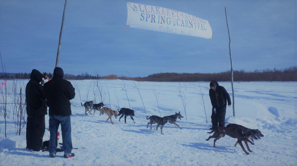 Allakaket Spring Carnival - Dog musher crossing Finish Line.