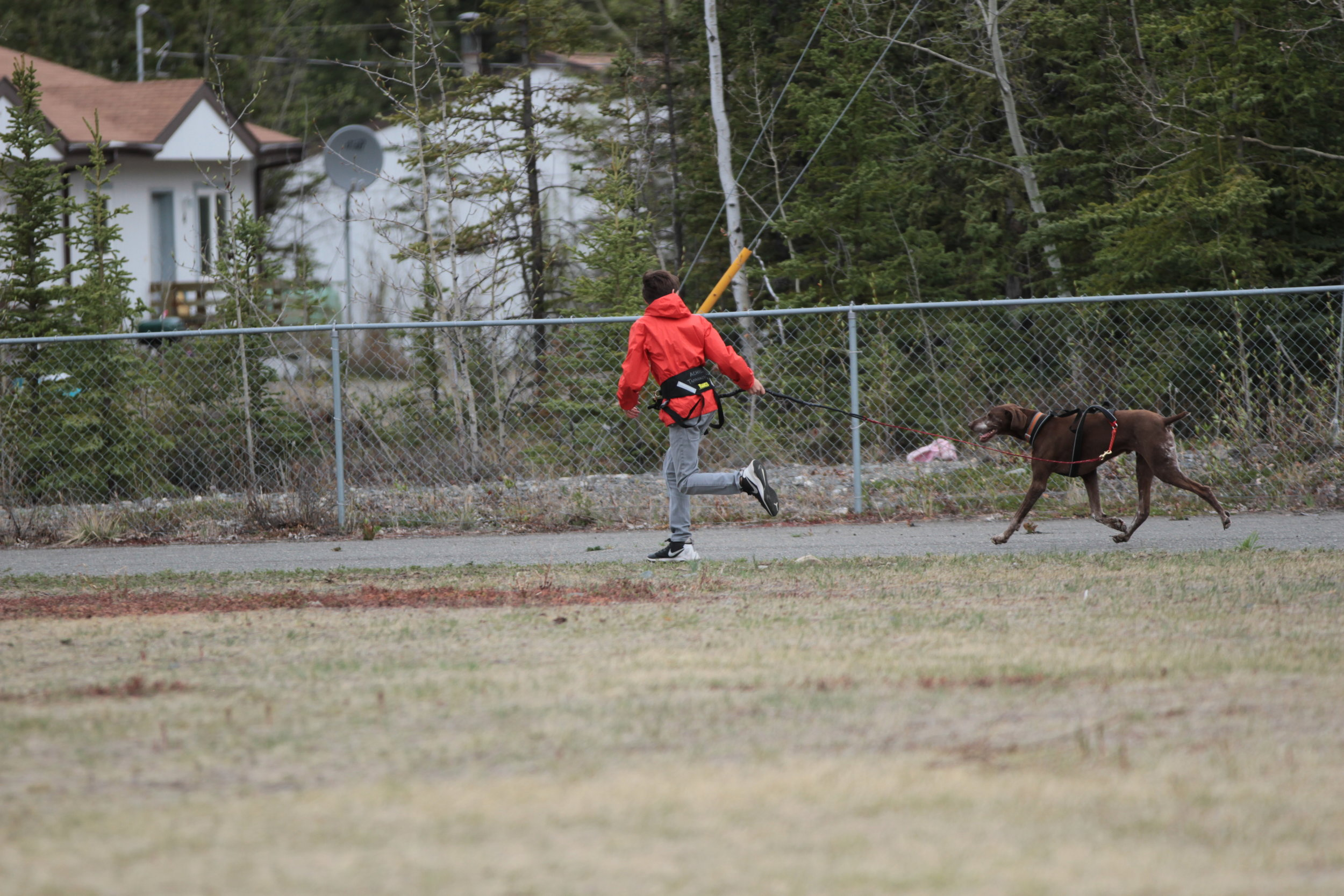 Tok student exercising a dog.