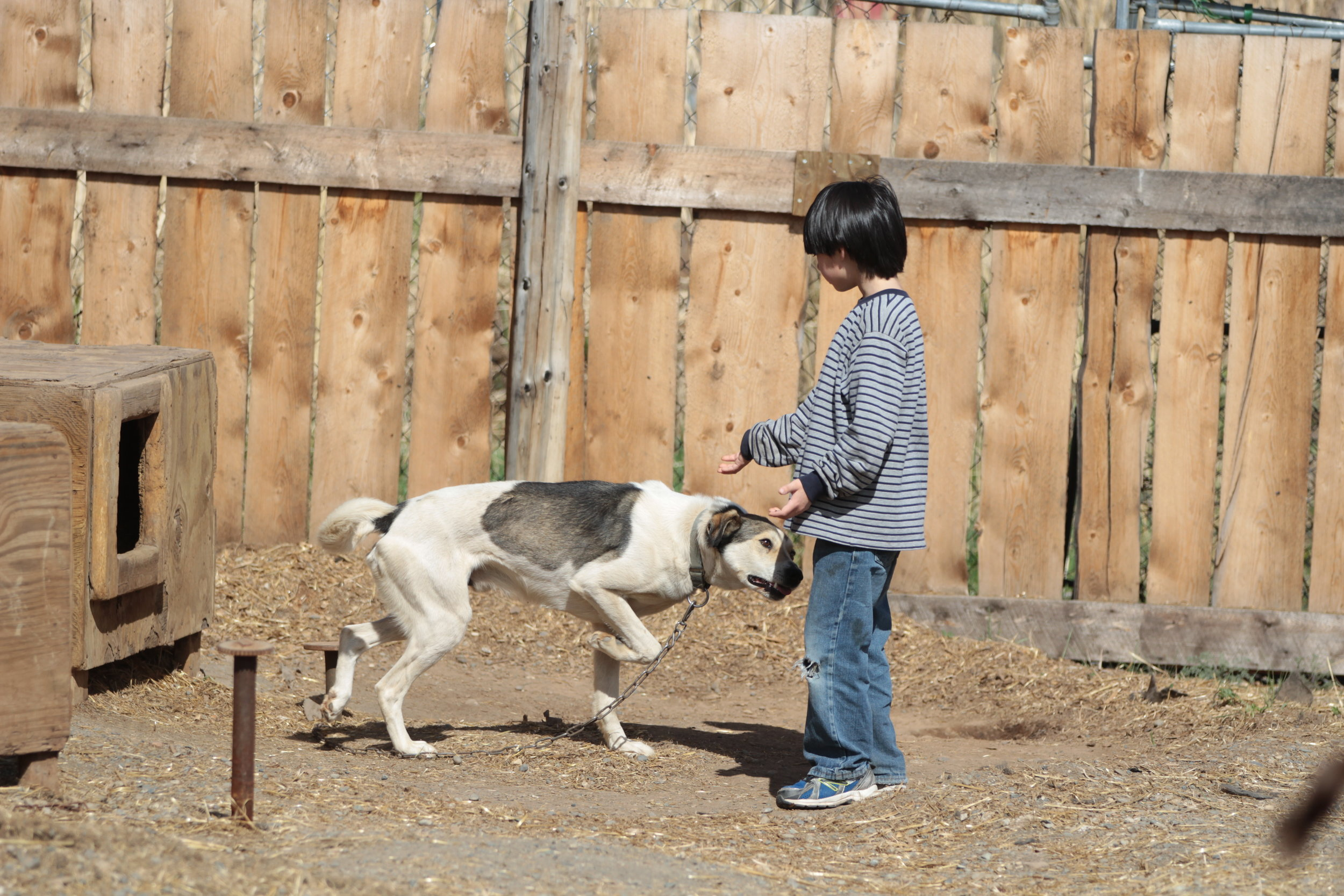 Tanacross student with dog in yard.