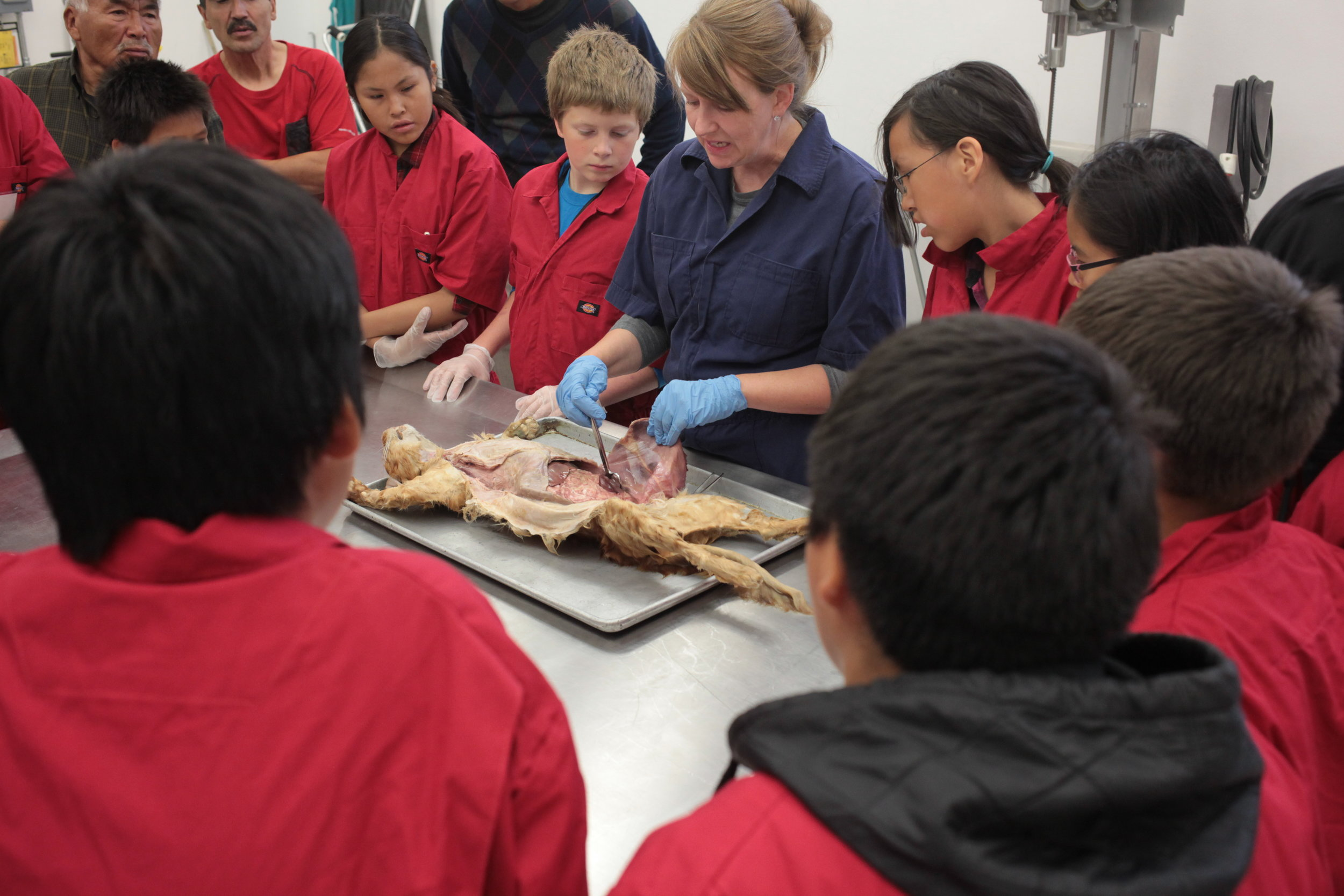 Students & Dog Musher Teachers listen to anatomy lecture.