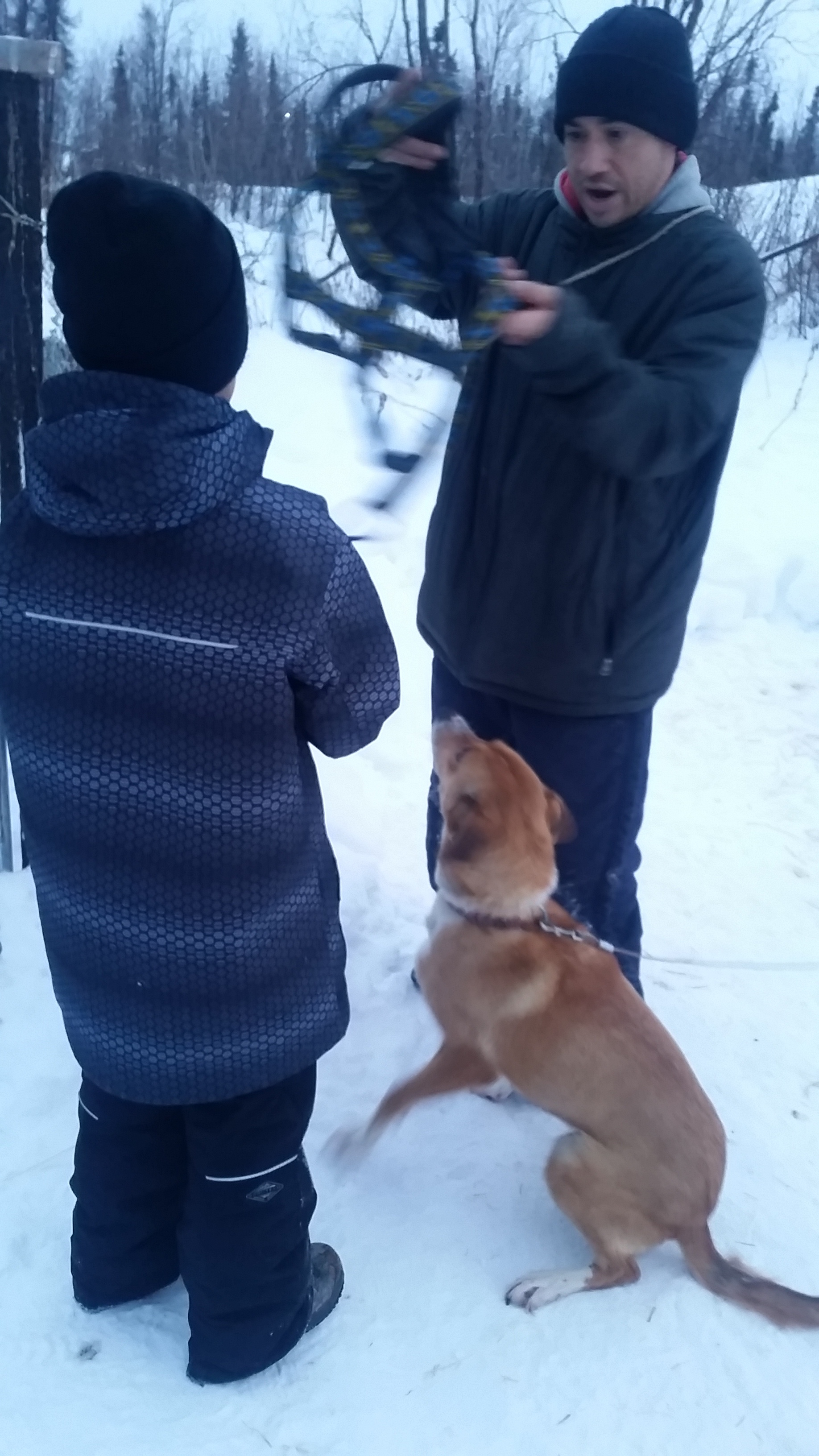 Dog musher teacher Charley Wofford, shows students how to harness a dog.