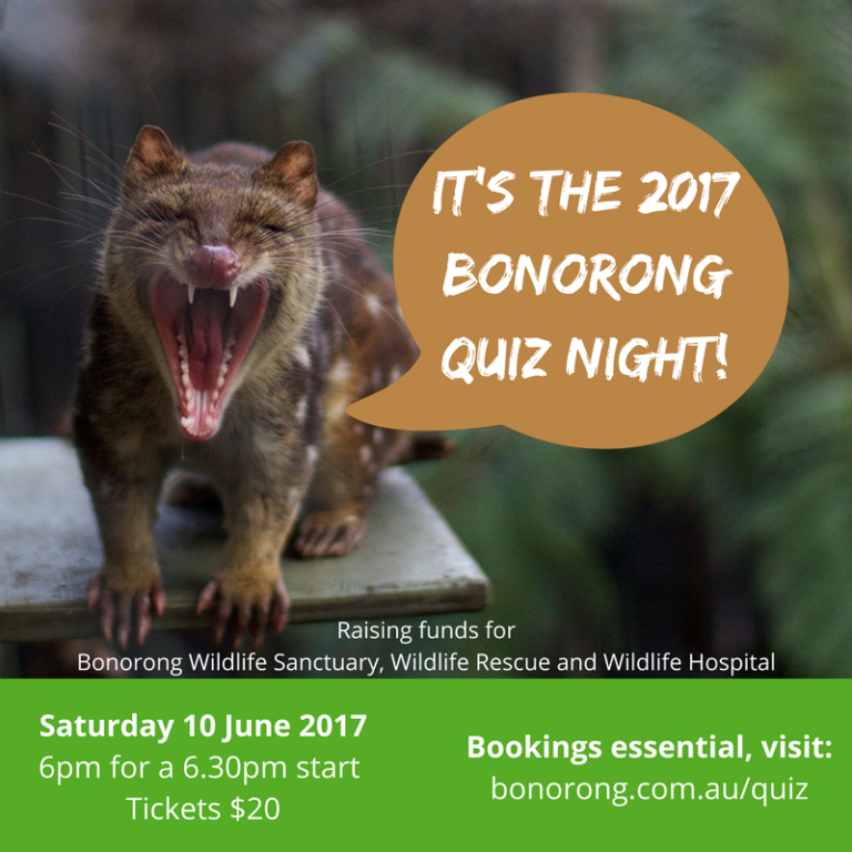 Blog — Bonorong Wildlife Sanctuary