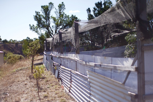One of Linda's three outdoor wombat enclosures.
