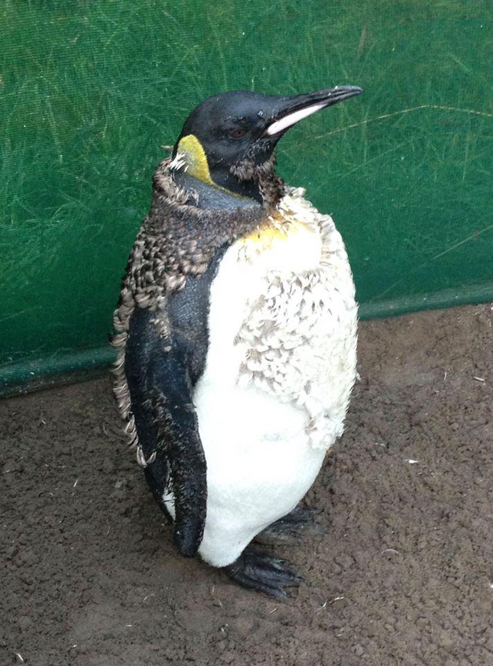 Noddy penguin3.jpg