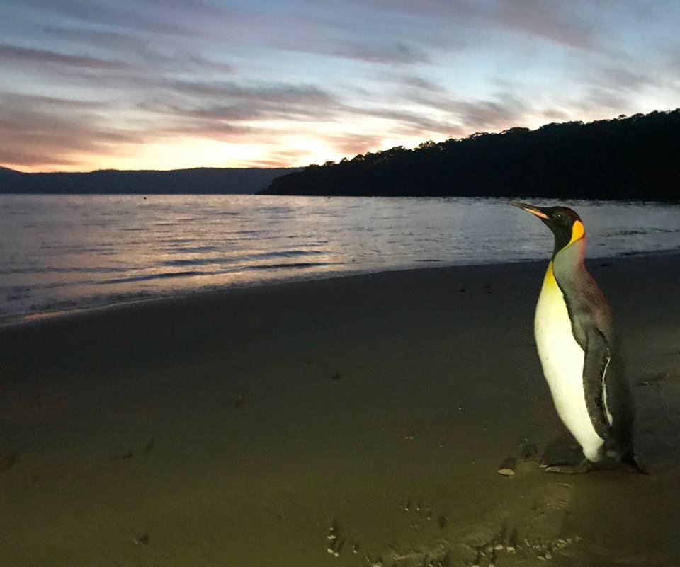 Noddy penguin4.jpg