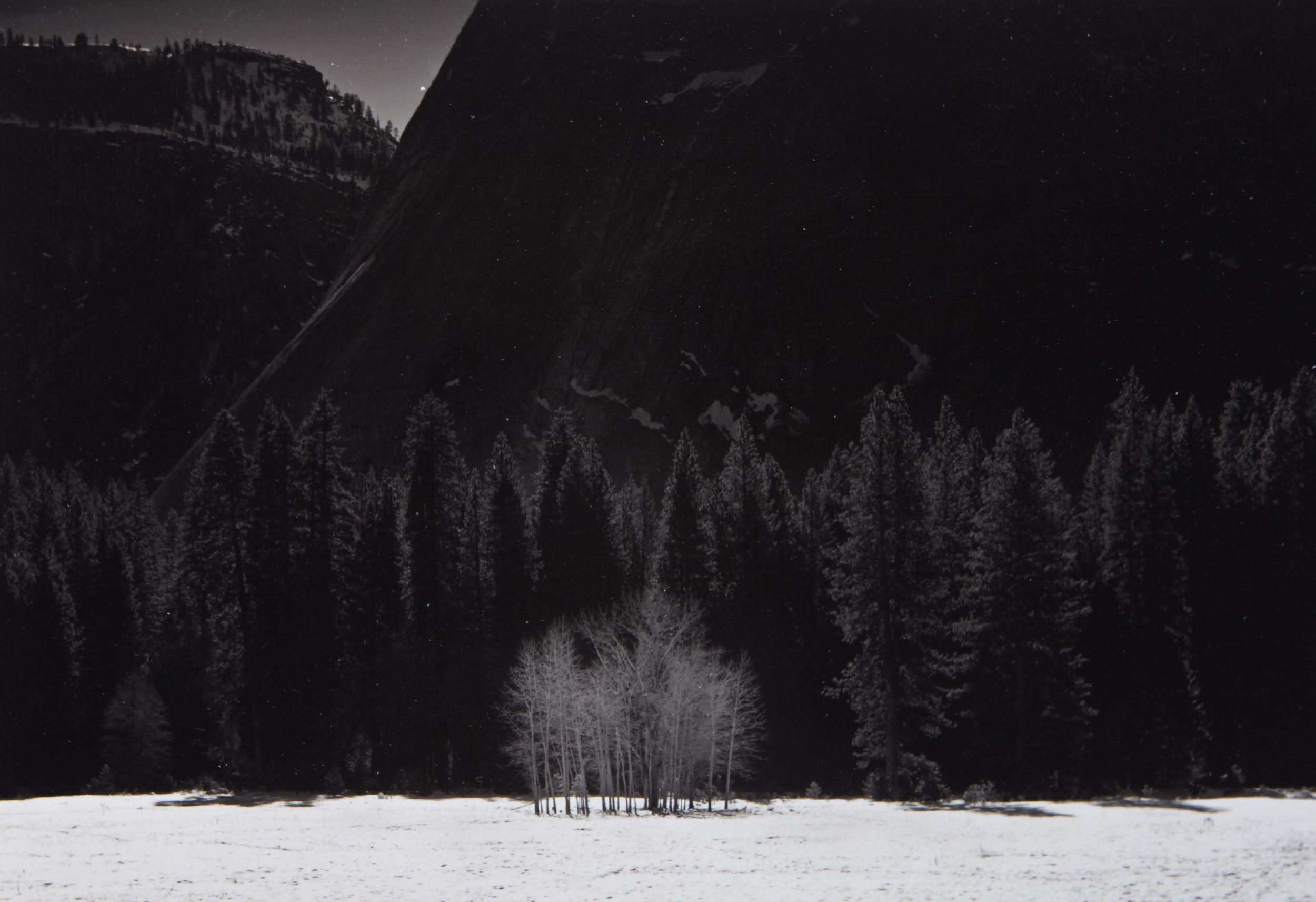 Trees In Snow, Yosemite