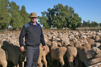 Pictured: Michael Field , TA Field Estates, with some of his Hazeldean blood sheep at Wyvern, Carrathool
