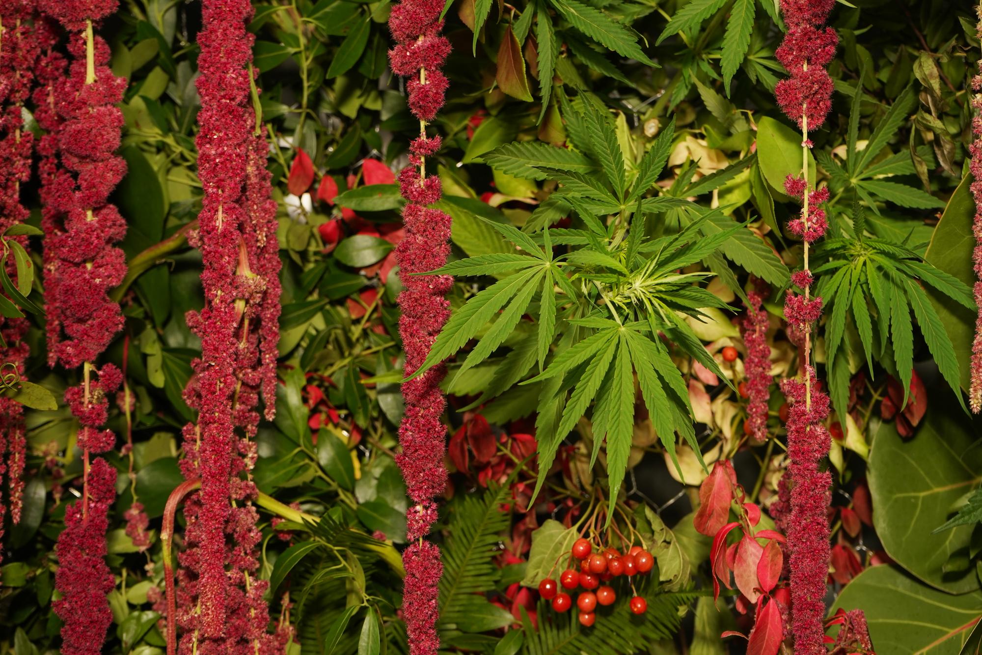 Flowercultt_spring_July_31_0038.jpg