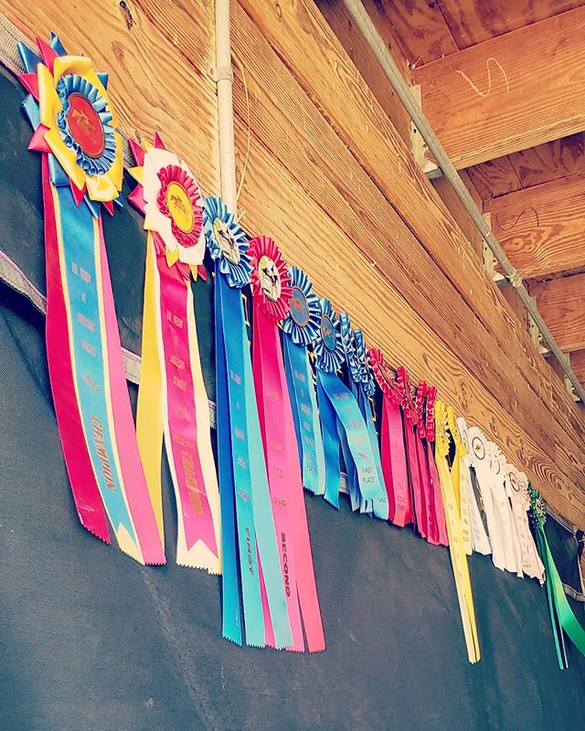 "Summer show season has begun. #thederbyatengleside was a blast. All of our riders rode their butts off and brought home the 🥓👍Lots of ""firsts"" for everyone. This is going to be a long one. 🦄Izzy & Ursula showed for the first time EVER in the Level 1 hunters 🦄 Martha showed with team Engleside & new owner Nicholle for the first time in the Level 2 Hunters & Adult Hunters 🦄 Colleen navigated Manny for the first time in the show ring in the Adult Hunters. Earning a Champion. Rode in her first Derby Classic & Won. 🦄Returning to the show ring after a few years hiatus was Jade & Quinn in the Adult Hunters. Also  competed in both of their first Derby classics ever, earning 3rd place. 🦄 Paula stepped in the show ring for the first time ever on mister Quinn in cross rails. 🦄Avery (another first timer) & Allie walk trotted to a first place & Reserve champion. 🦄Tayler rode in her first equestrian class on her fellow steed Boston & was Reserve Champion in the Adult Hunters. 🦄Frieden was fast & firey in the Level 3 jumpers & Second in the 3'/2'6"" Derby Classic.  Such a fun filled day at the farm with everyone who joined us! Cannot wait for the next Derby Day Saturday July 13th and clinic July 14th."