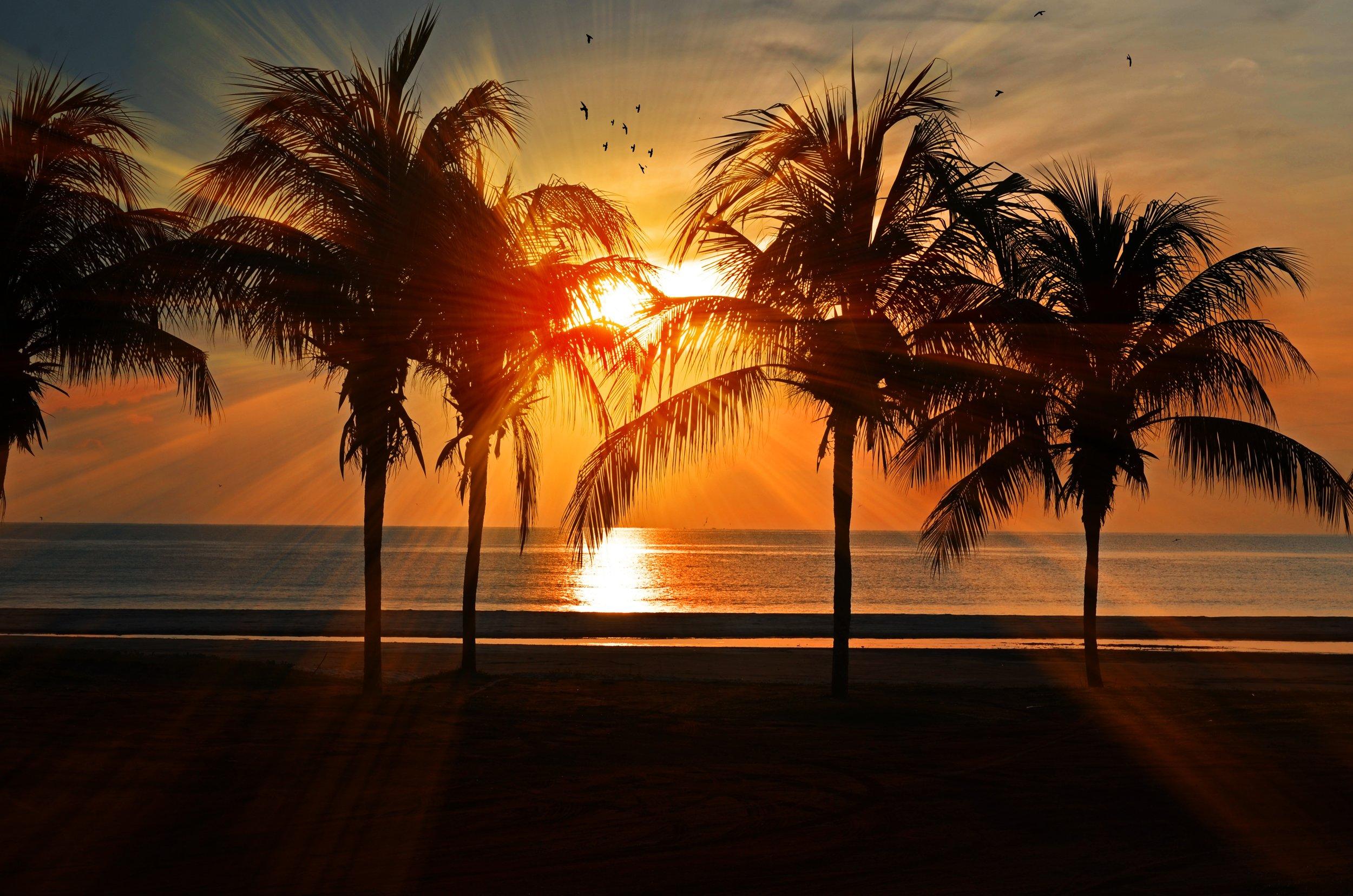 Palm trees.jpeg