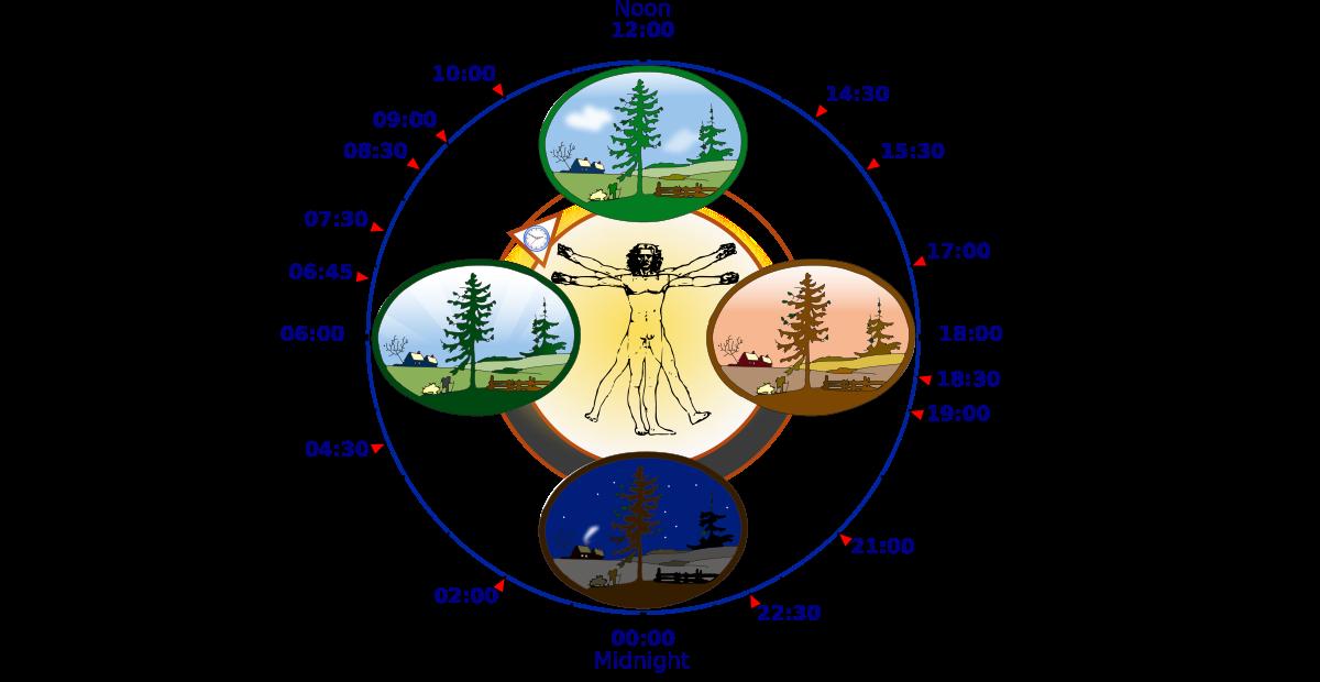 Circadian Rhythm.  Wikipedia .