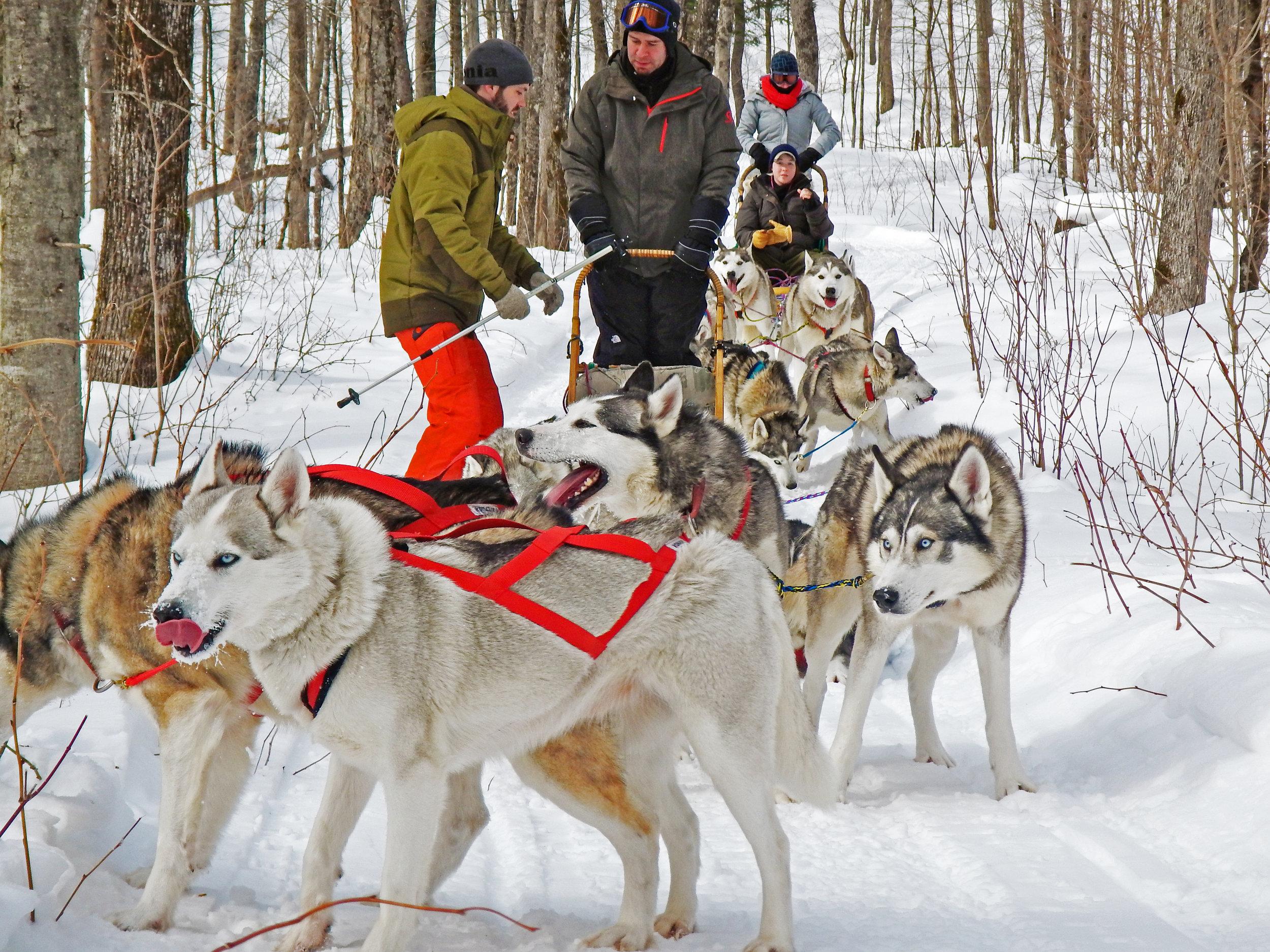 Dogsled through Cushing wildlife refuge