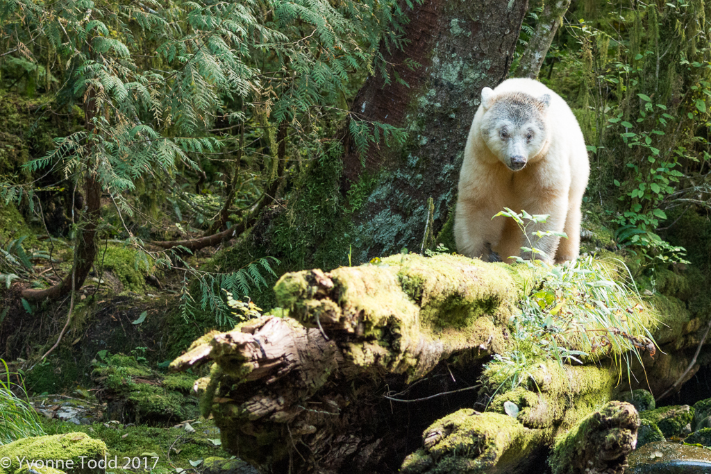 Spirit Bears-169 as Smart Object-1.jpg