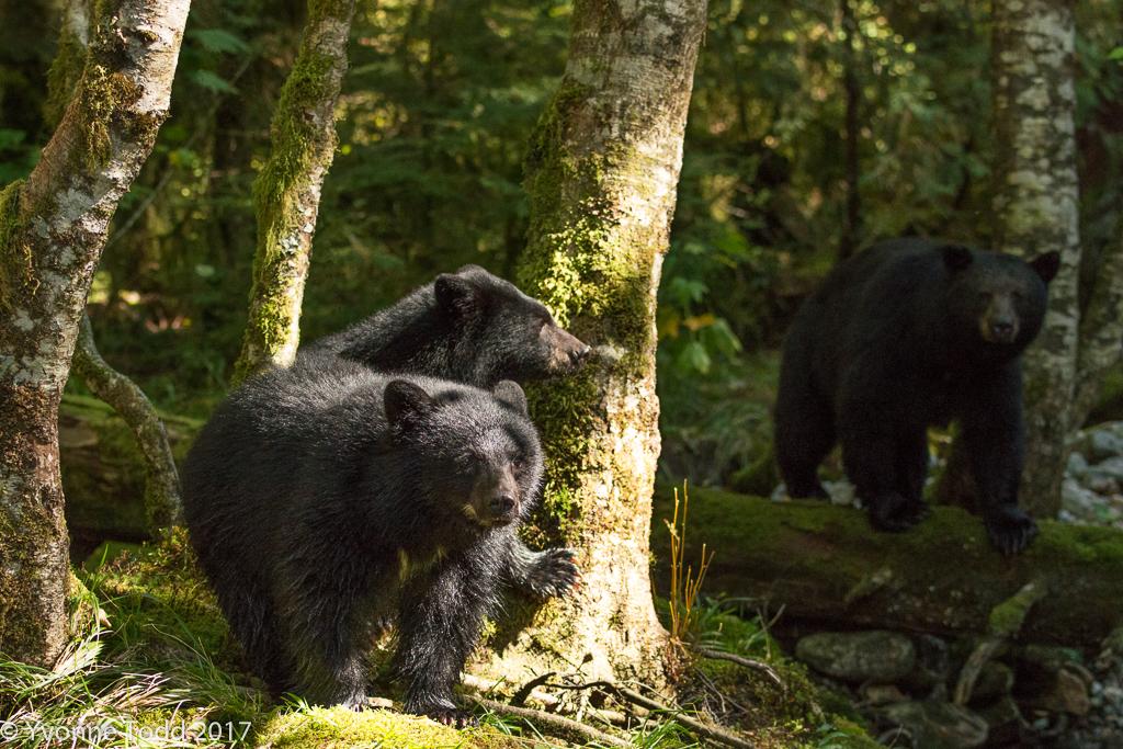 Spirit Bears-515 as Smart Object-1.jpg