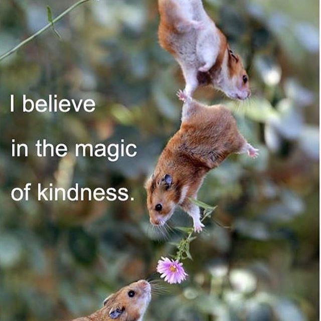 I believe in the magic of kindness. ♥️ #bekindtogether ♥️ #wecandomoretogether ♥️ #youarenotalone ♥️ Pay some magical kindness forward my friends. It is always a magical choice that does create a ripple! - - - #payitforward #kindess #globalbodyhealth #kristitayloryoga #epicoilhacks