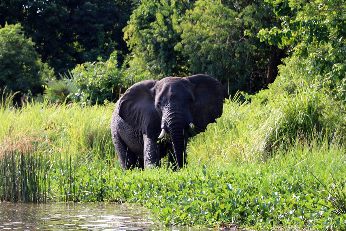 Customize your safari - Malayaka House Safari Tours are Completely Customizable