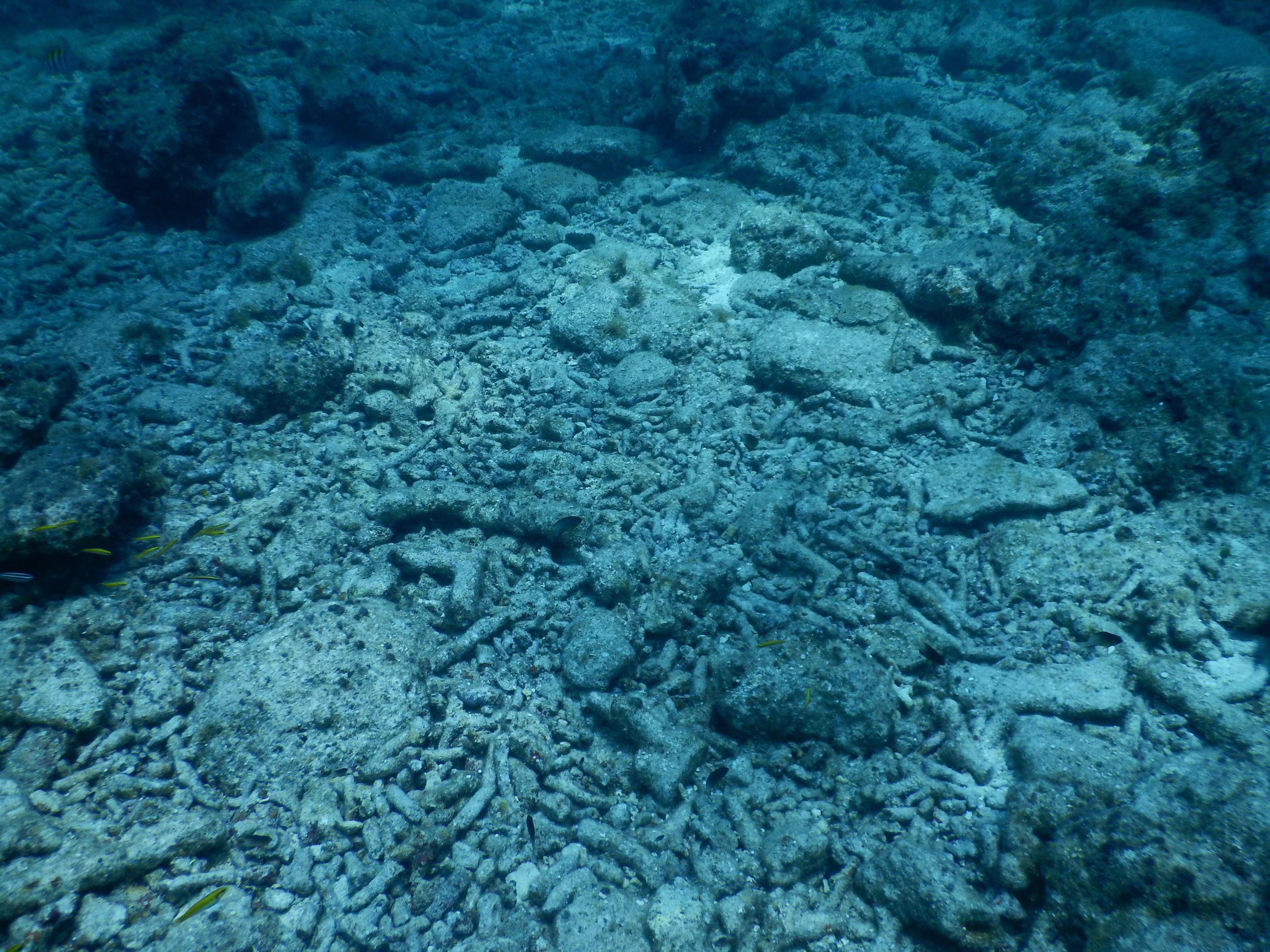 dead_coral.JPG