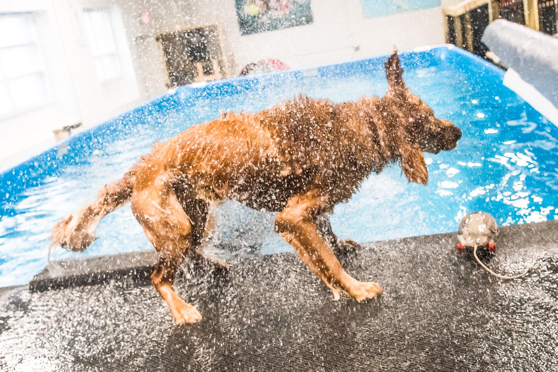 Swimming Dogs-4.jpg