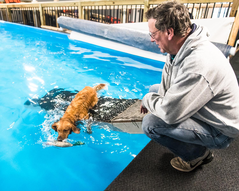 Swimming Dogs-8.jpg