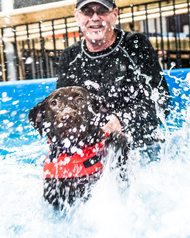 Swimming Dogs-15.jpg