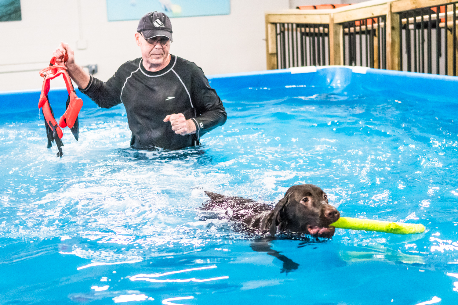 After a few minutes of getting used to being in the water at Club Aqua Paws owner, Mike Iwon, Racine, removes the life jacket helping six-month-old Tilly learn to swim. Tilly picks up swimming naturally and begins playing with toys.