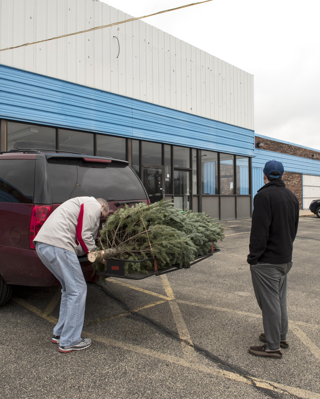 """Christmas Tree Browsing, 2016"""