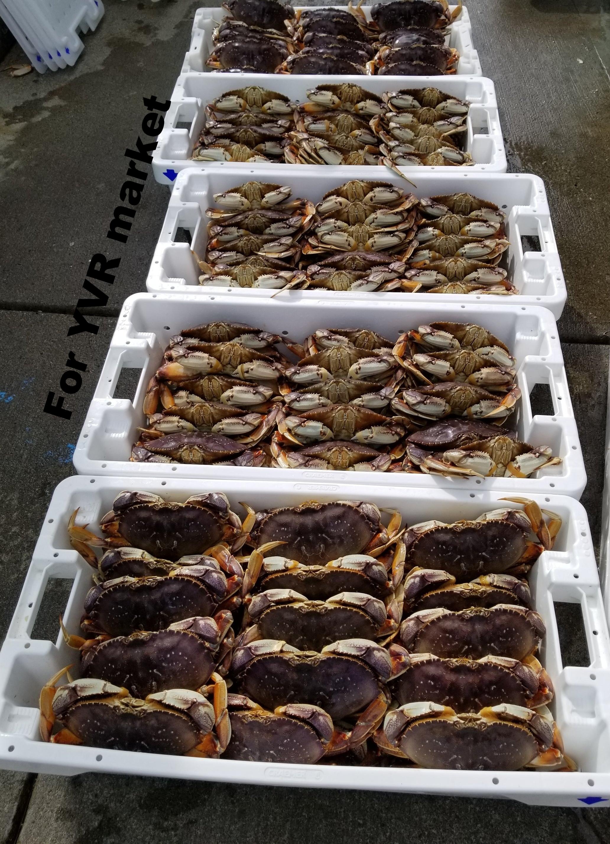 Crab Line Up
