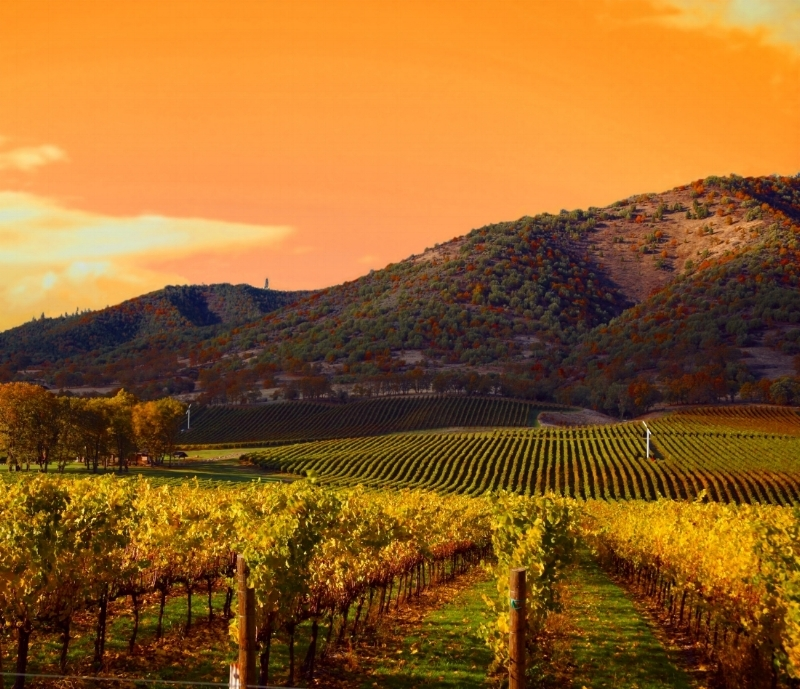 Napa Valley Based - Living a life, calling it as I see it.