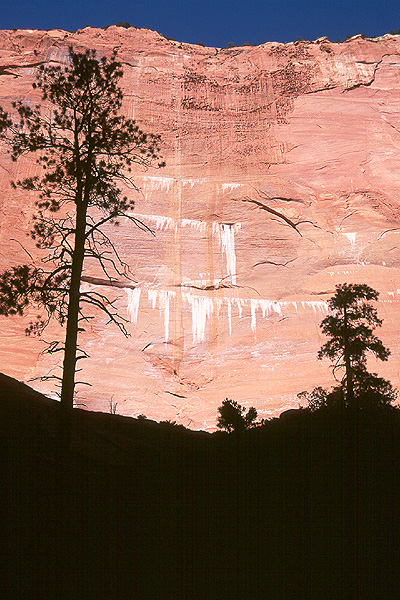 #9815 Wall and Trees, Taylor Canyon (Zion)