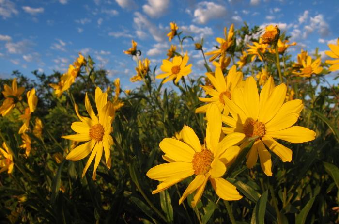 West Rim flowers soak in the early morning light.