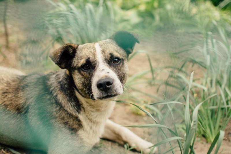 dogs-grass-animals.jpg
