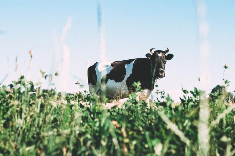 farms-animated-fields.jpg