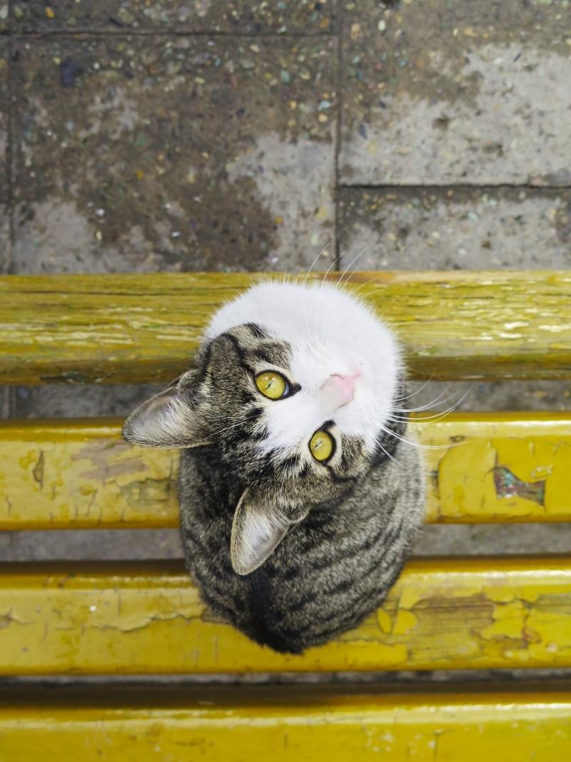 cat-eyed-cats-eyes.jpg