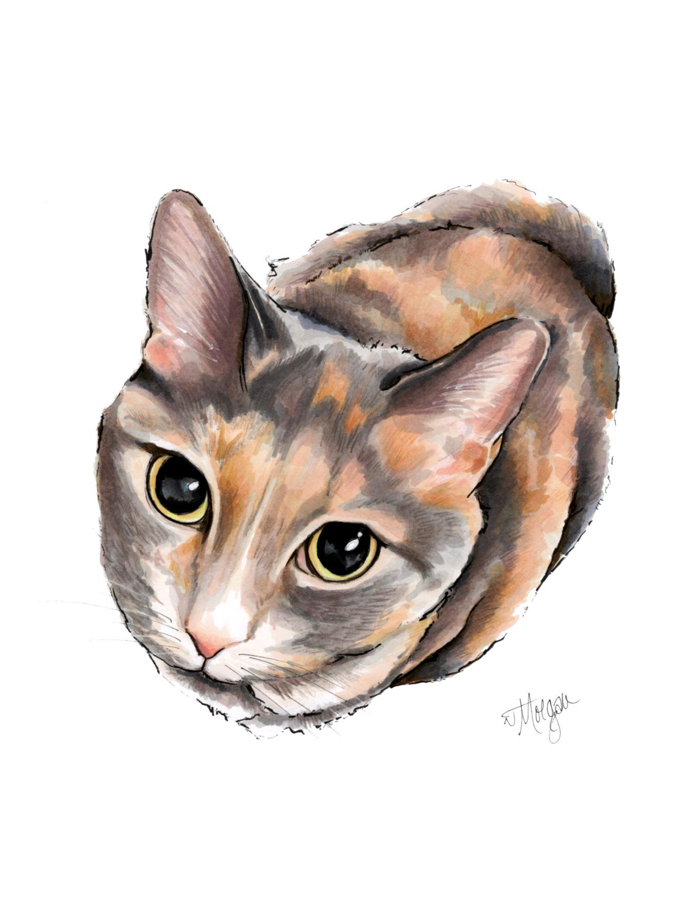 cat-portrait-morgan-swanks-studio.jpg