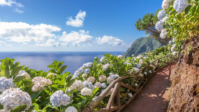 Hydrangeas-Azores_GettyImages-491086884.jpg
