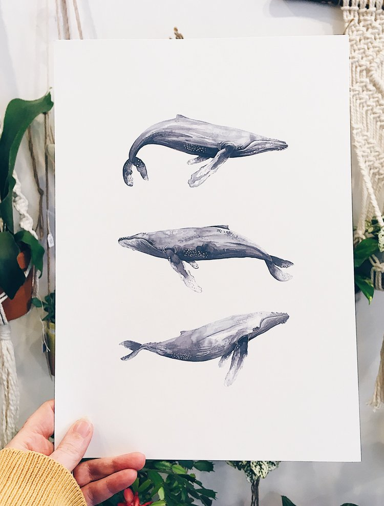 Humpback Whale Print by Moonko £20