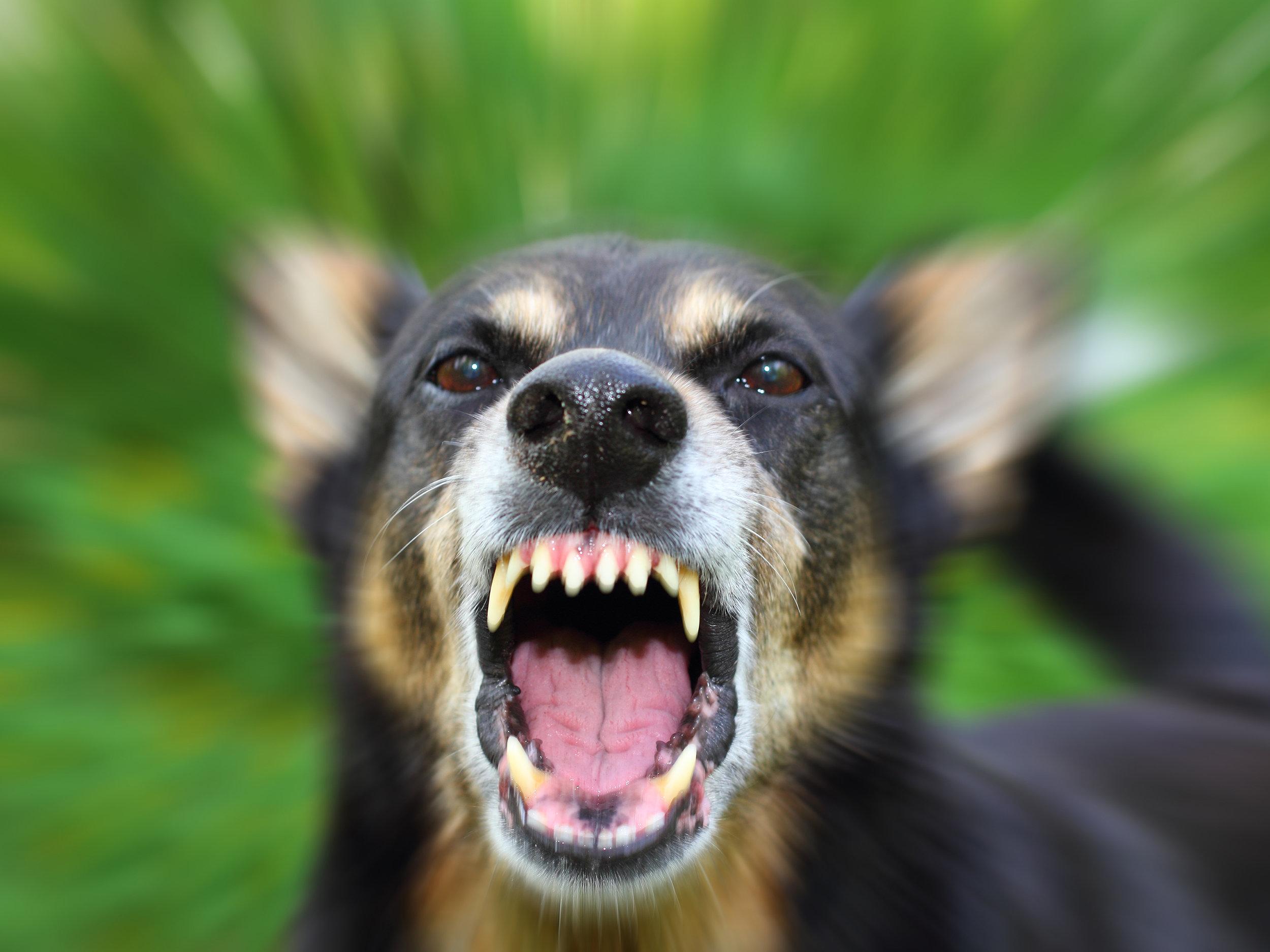 dog-bite.jpg